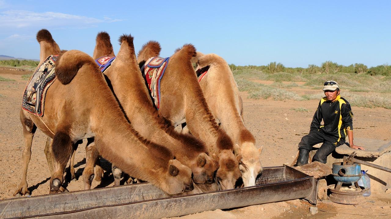 camelbak chameaux